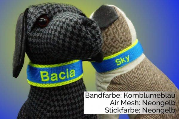 Hundehalsband Blau Gelb