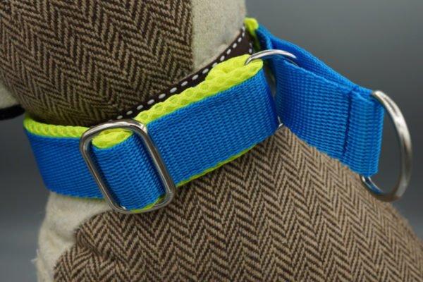 Hundehalsband blau-gelb