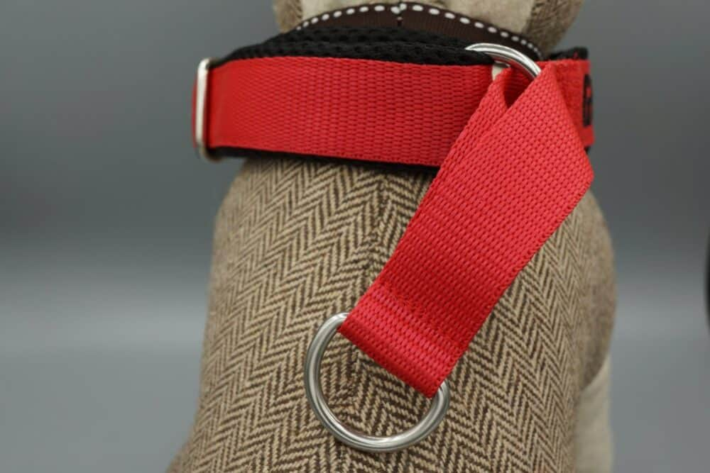 Hundehalsband mit Zugstopp