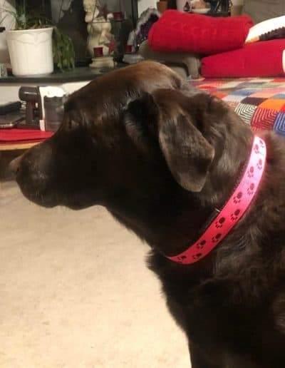 Pfotenband Pink