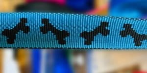 Halsband Blau mit Schwarzen Knochen