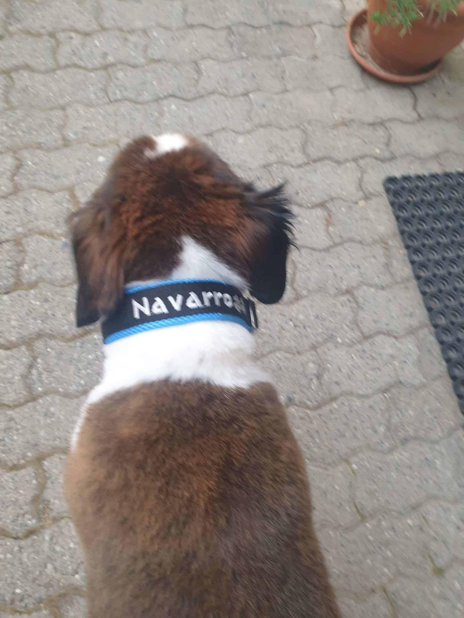 Navarro 1 scaled