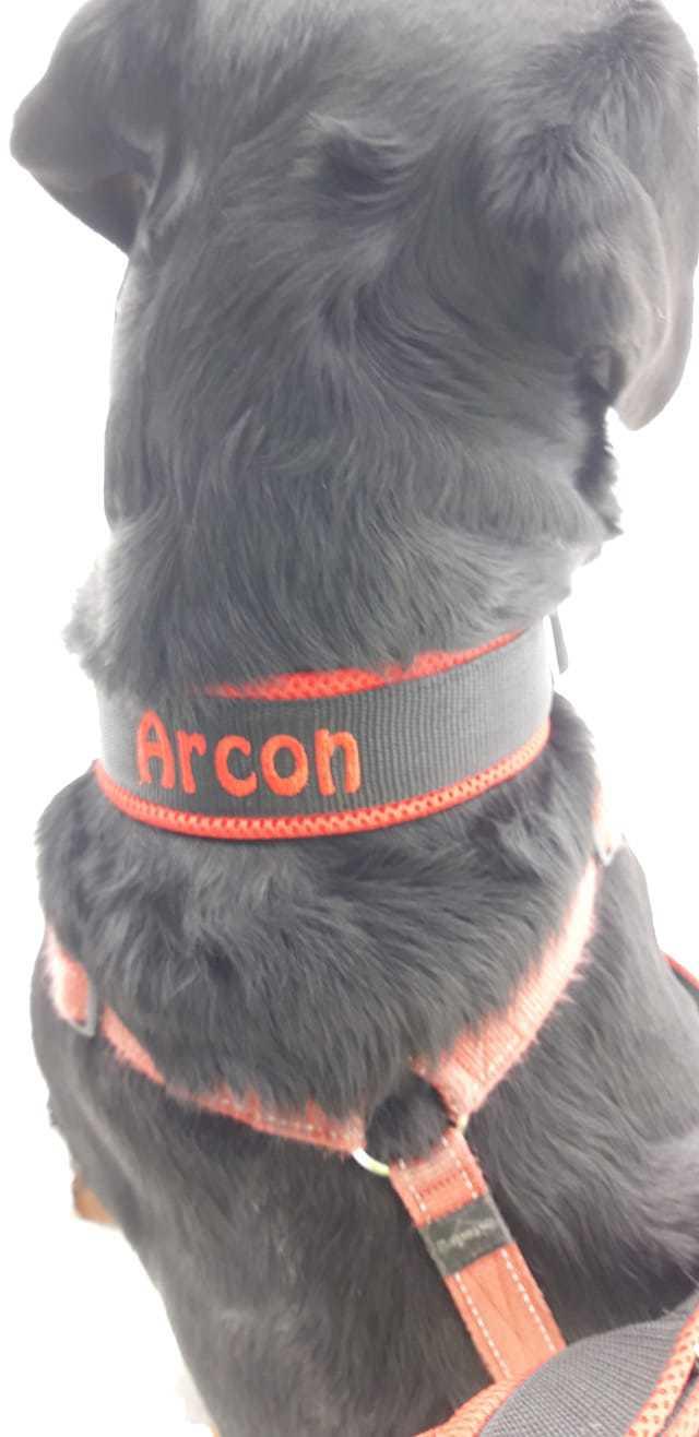Halsband von Arcon