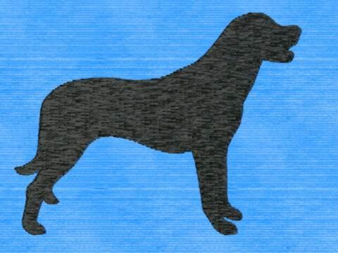 Anat. Hirtenhund