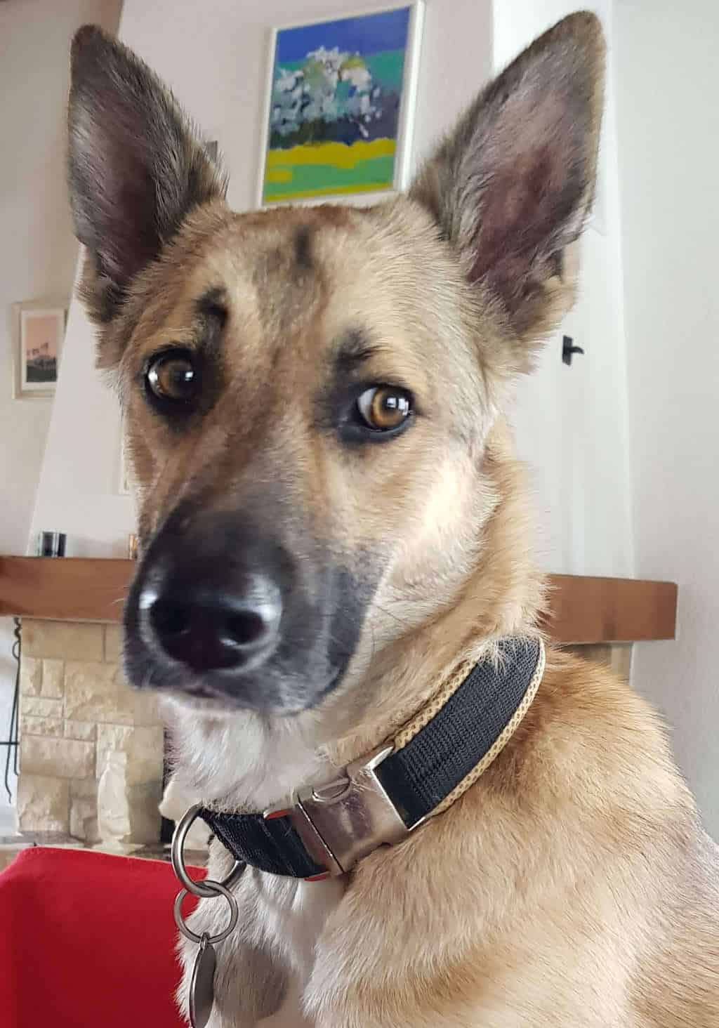 Kundenhund Lucky