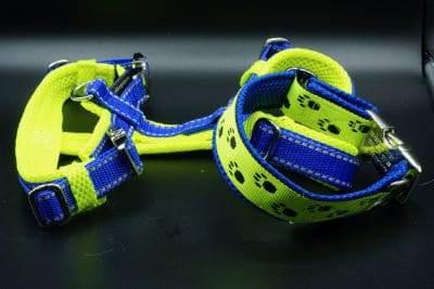 Halsband und Geschirr in Blau Neongelb